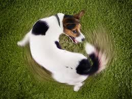 tail_chasing